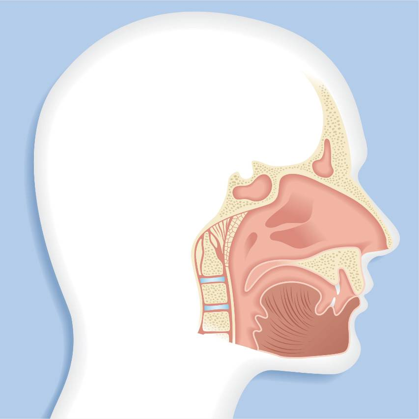 A diagram of the sinus system
